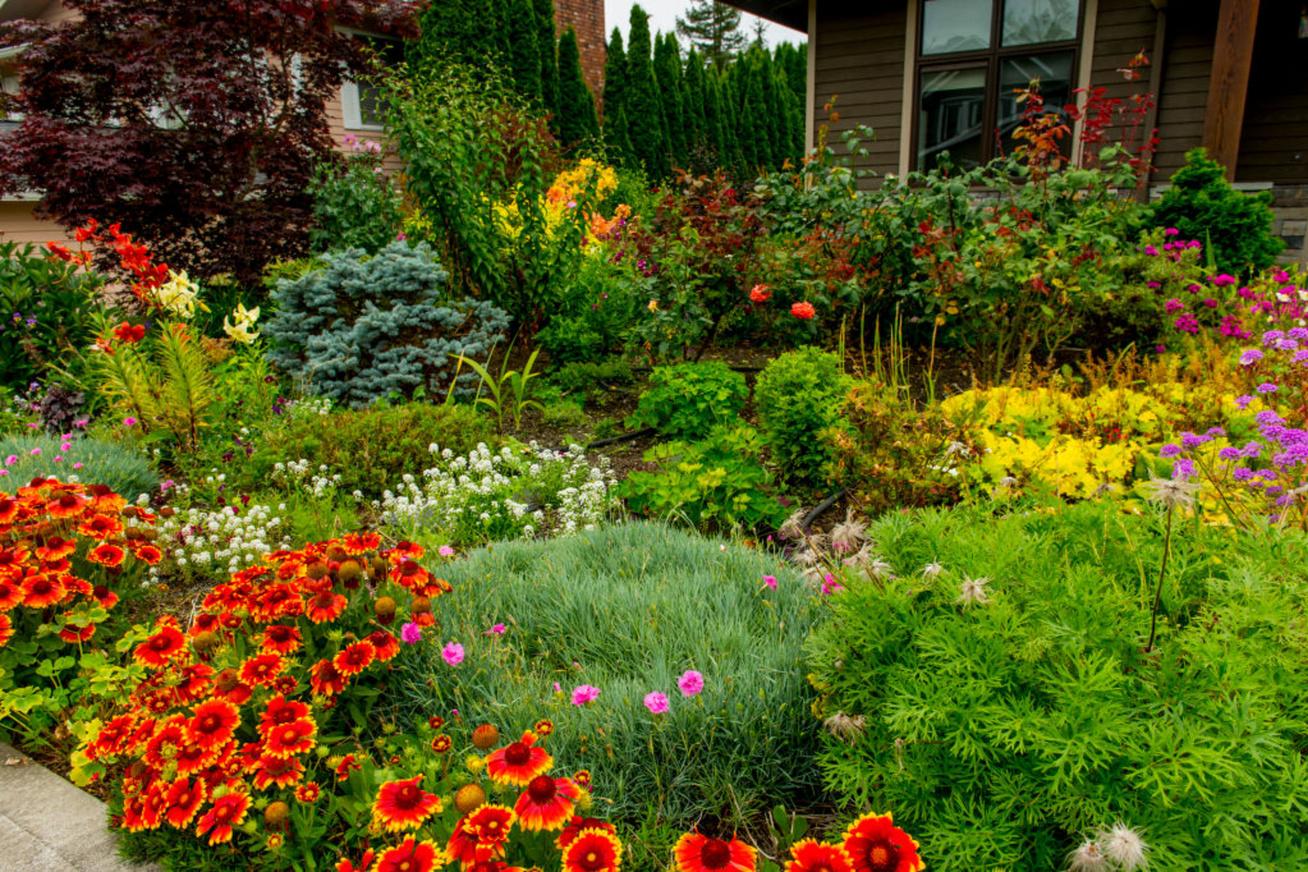 kerti növények