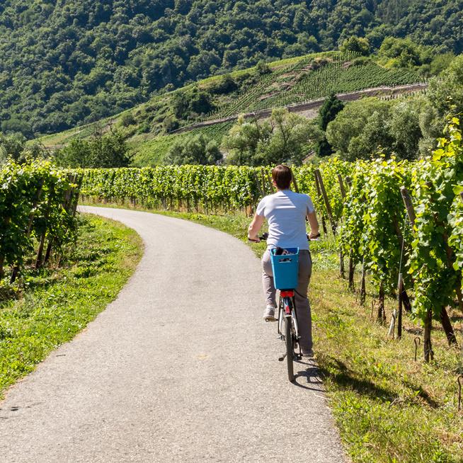 Járd be biciklivel a Villányi borvidéket, vagy vegyél részt gourmet pikniken - Szuper programok lesznek a hétvégén