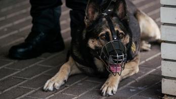 Kutyavásárt hirdetett a NAV