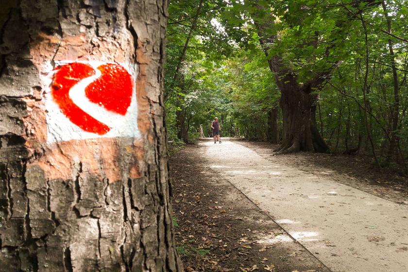 6 gyönyörű kardioösvény Magyarországon, ami nem csak a szívnek és az érrendszernek tesz jót