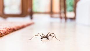 Pókok ellen: 5 házi praktika, amikkel távol tarthatod őket a lakástól