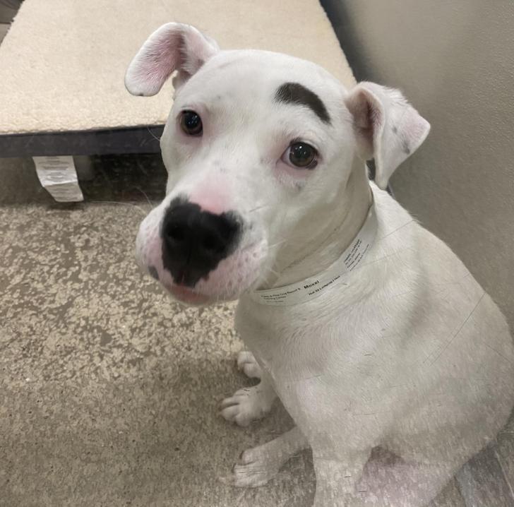 Ez a kutya olyan, mintha lenne egy szemöldöke.