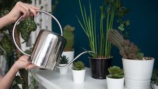 Így tartsd életben a szobanövényeket a nyaralás alatt