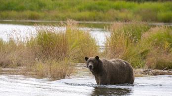 A kéktúra vonalán találtak medvenyomokat