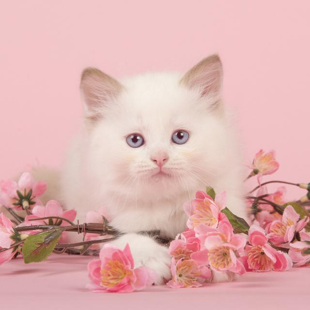 Így nézne ki, hogyha a macskák valójában virágok lennének: a végeredmény kiakasztja a cukiságmérőt