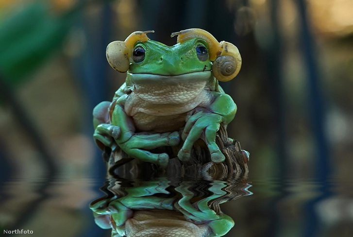 tk3s h mdrum princess leia frog-5
