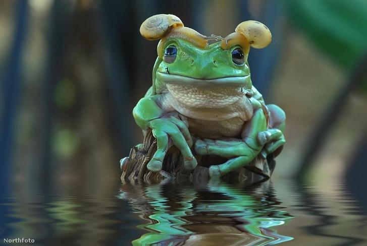 tk3s h mdrum princess leia frog-2