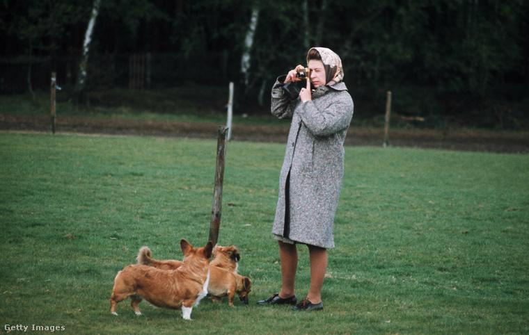 A királynő ezen a fotón épp a corgijait fotózza a Windsor Great Parkban 1960-ban