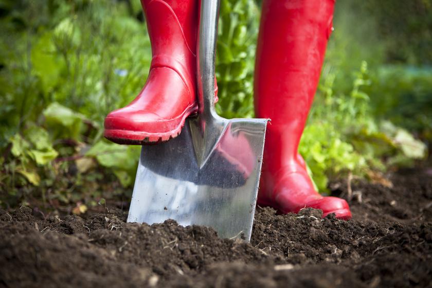 Ezért áss el egy rongyot a kertben: hamarosan megtudod, milyen minőségű benne a talaj