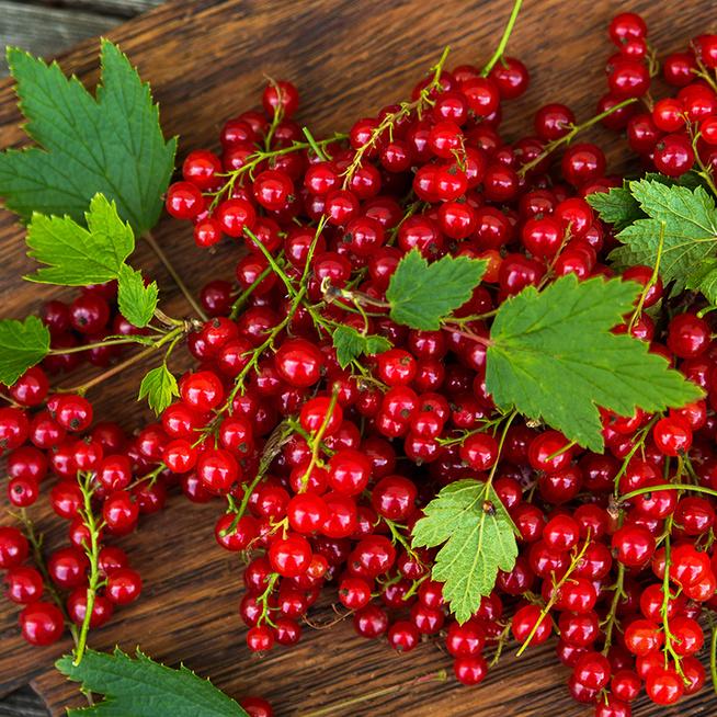Apró, de valódi vitaminbomba a ribizli: érdemes gyakran fogyasztani, amíg tart a szezon