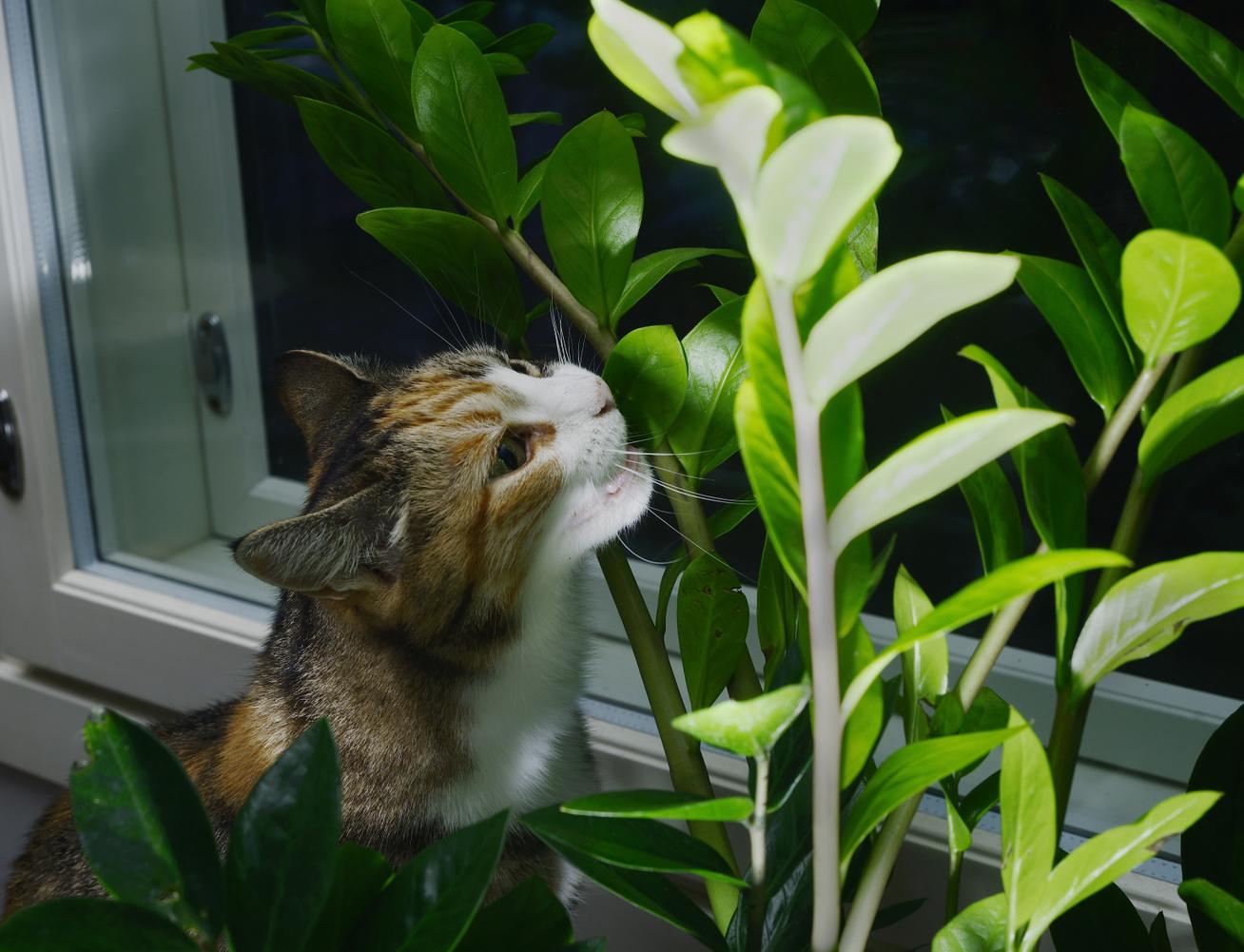 macskák-szobanövények-borító
