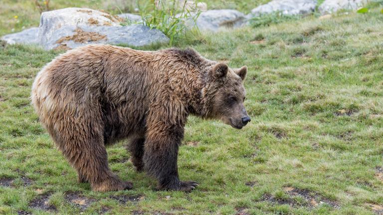 Medvét etettek a turisták, megbüntették őket