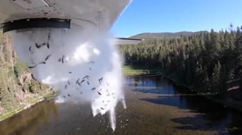 Repülőgépről szórják a halakat a tavakba