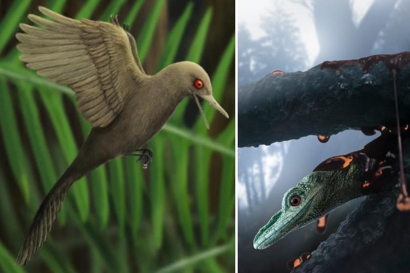 Így nézett ki a világ legkisebb dinoszaurusza: a 99 millió éve élt lény voltaképpen egy kis gyík volt