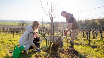 Így lehet kezdőként is saját gyümölcsöd: hasznos tippek a gyümölcsfaültetéshez a kertésztől