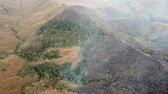 Már több szén-dioxidot bocsát ki az Amazonas vidéke, mint amennyit elnyel