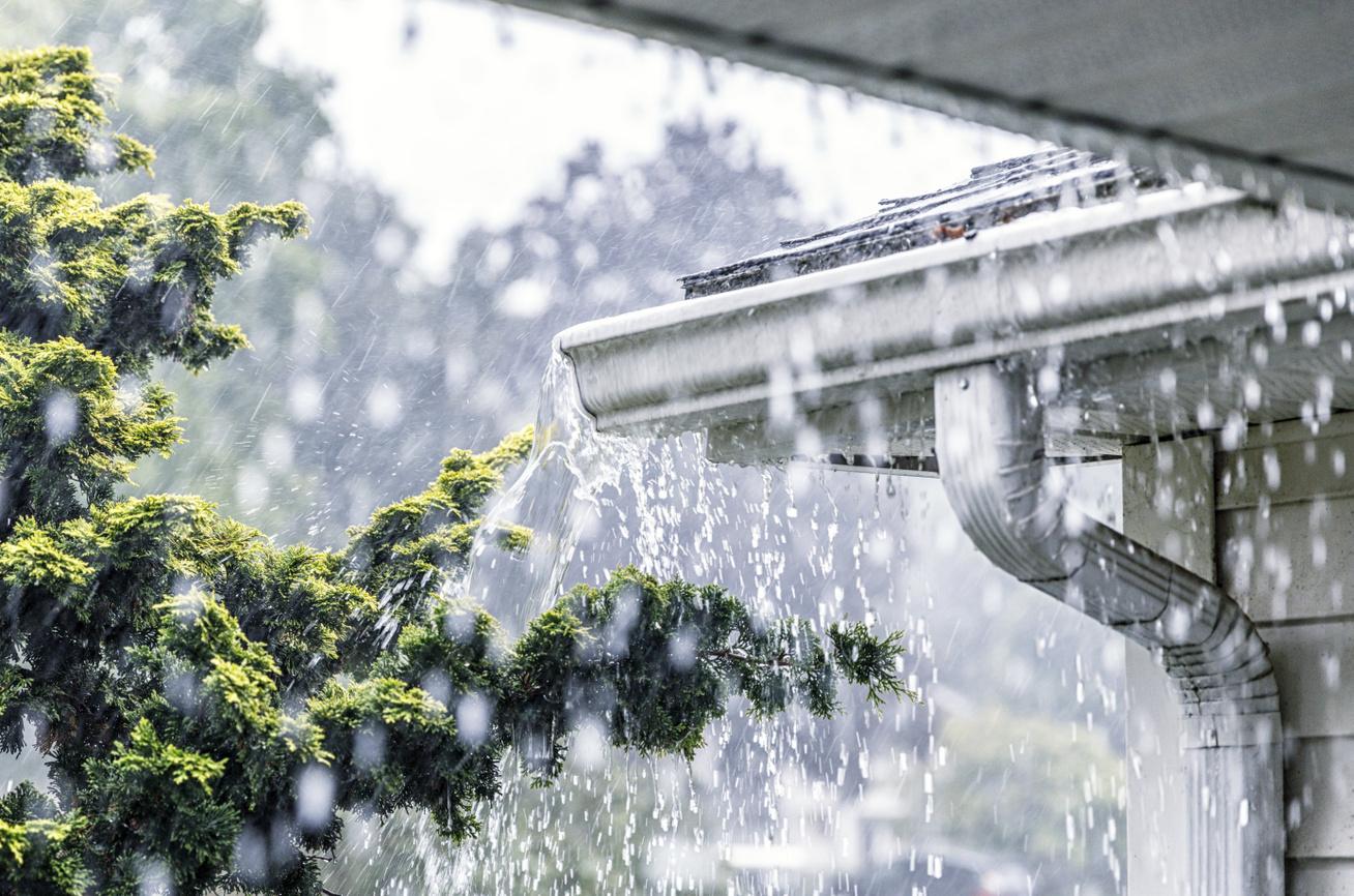 eső-erdő3
