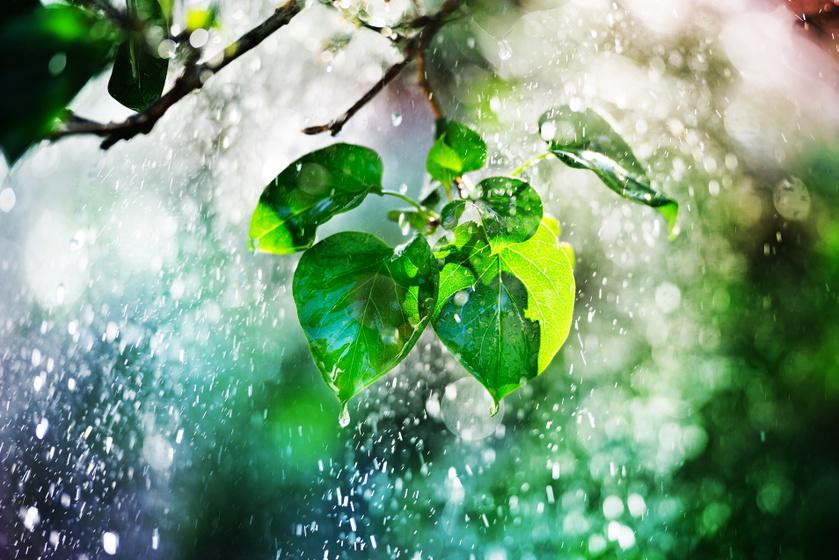 eső-erdő2