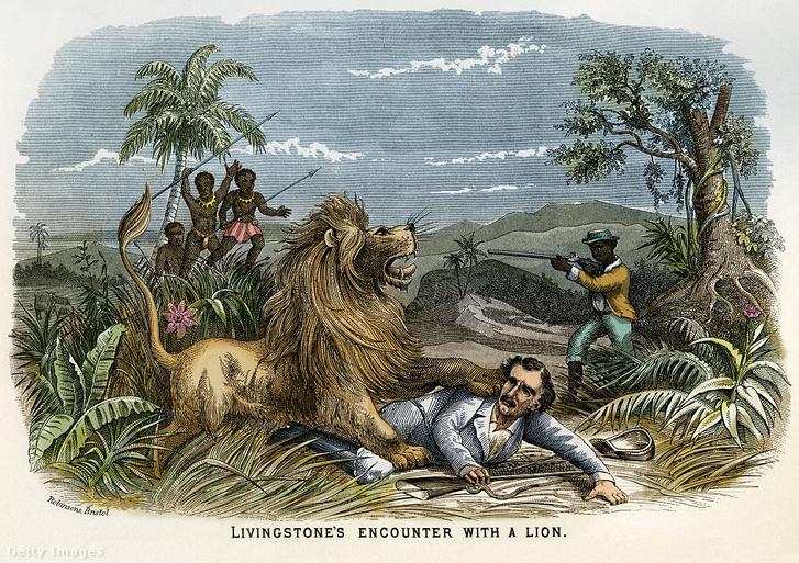 David Livingstone felfedező találkozása egy oroszlánnal 1845-ben Afrikában – túlélte