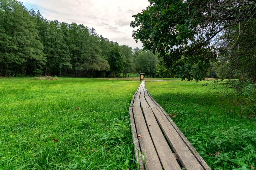 A szőcei tőzegmohás láprét az Őrség egyik legjelentősebb, fokozottan védett természeti kincse, ami egy rövid tanösvény segítségével felfedezhető. Kicsik és nagyok egyaránt élvezhetik a pallókon sétálást, lelépni viszont nem szabad, hiszen ritka fajok és különleges növénytársulások nőnek a környéken.