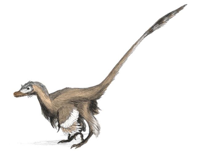 Tollas Velociraptor (forrás)
