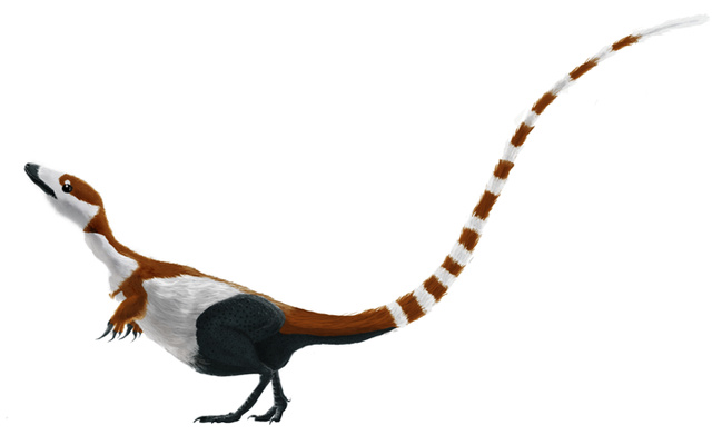 Sinosauropteryx (forrás)