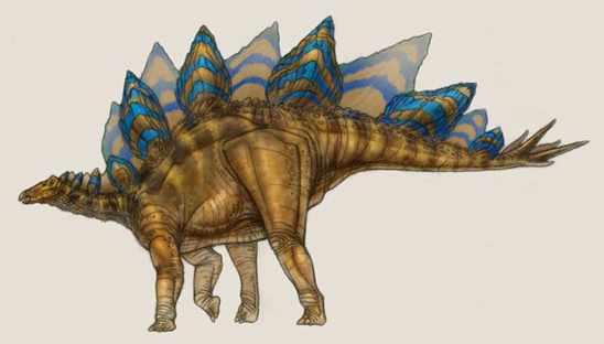 Stegosaurus ma
