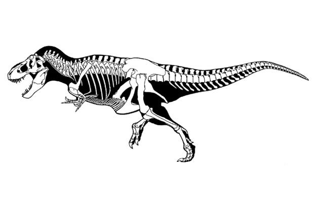 Gregory Scott Paul fekete-fehér képe a Tyrannosaurus rexről