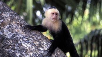 Már a majmok is egyenlő bért követelnek