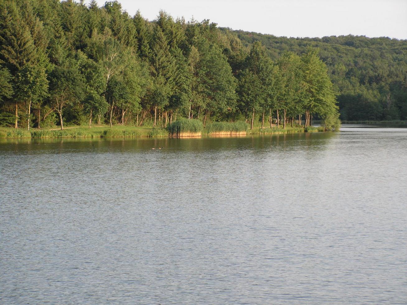 hársas tó