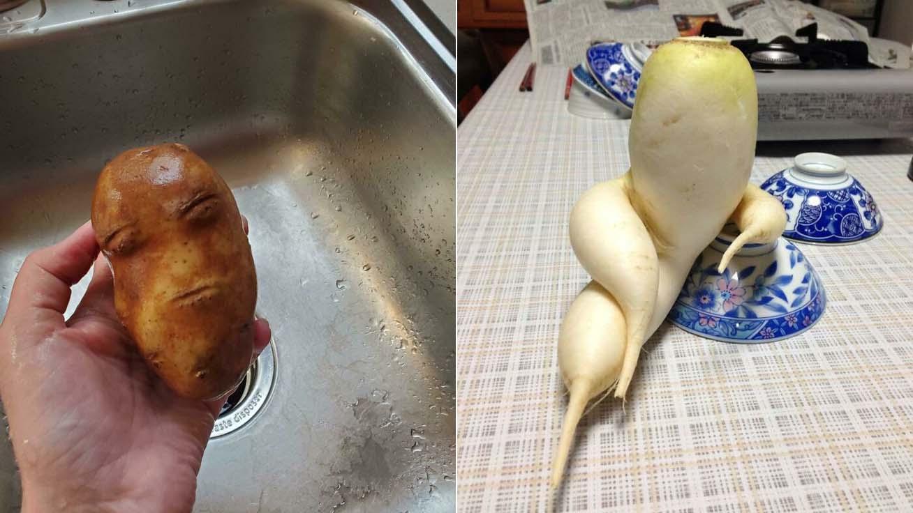 furcsa-zöldségek-borító