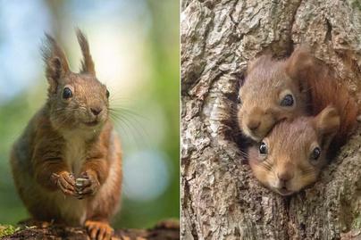 mókus-fotók-borító