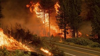 Már az USA 13 tagállamában pusztítanak erdőtüzek, egymillió hektár lángol