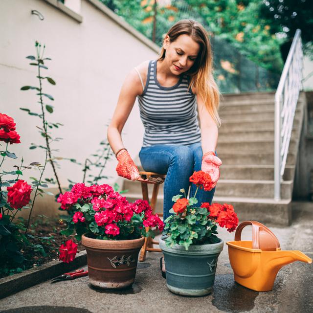 Színpompás kert nyár végén és kora ősszel: ezeket a virágokat ültesd a kertész szerint, ha előre gondolkodnál