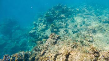 Veszélyeztetett világörökségi helyszín lehet a Nagy-korallzátony