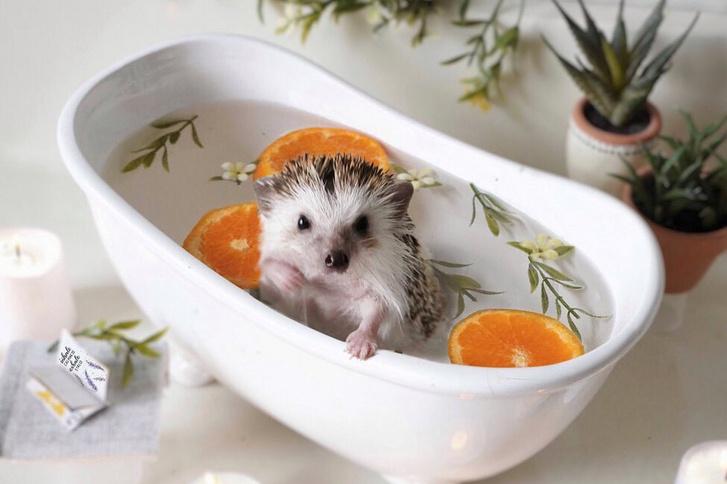Jól látja, Fahéjnak még saját fürdőkádja is van.
