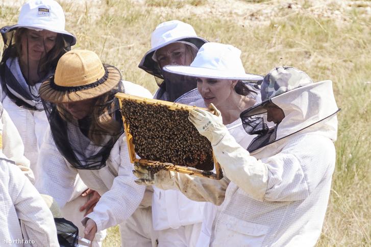 Anglina Jolie és a méhész hölgyek