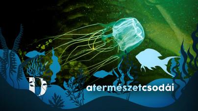 A kockamedúza a föld tíz leghalálosabb állatának egyike