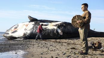 Simabálnákat gázolnak halálra a sebességhatárt túllépő hajók