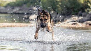 Nem mindegy, milyen vízben úszik kutyád: ilyen betegségek fenyegetik