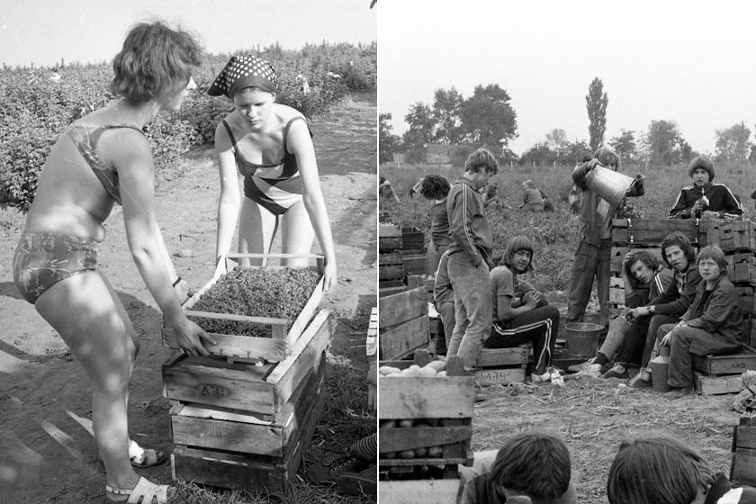 Ilyen volt a krumpliszedés és az árokásás a KISZ-táborokban: retró fotókon a régi nyarak