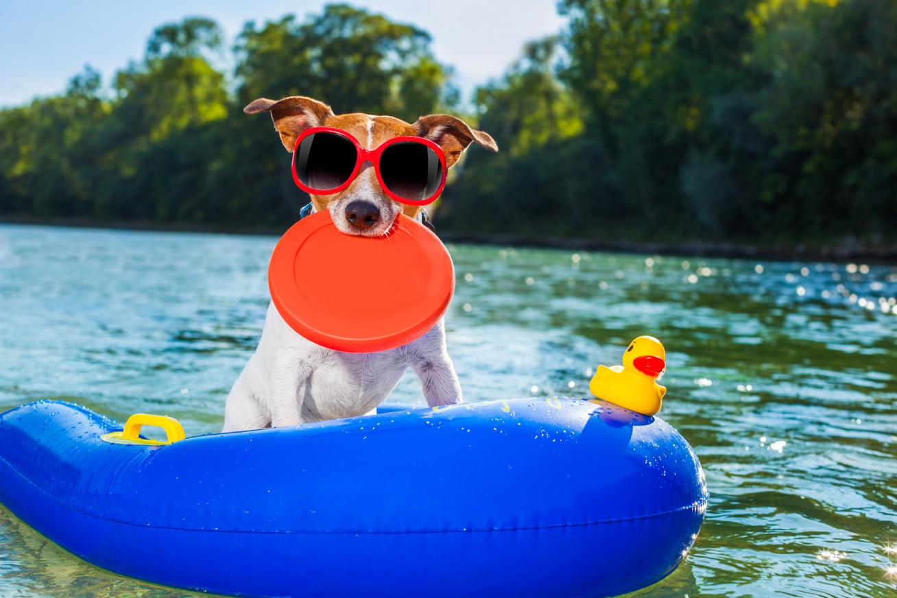 kutya strand