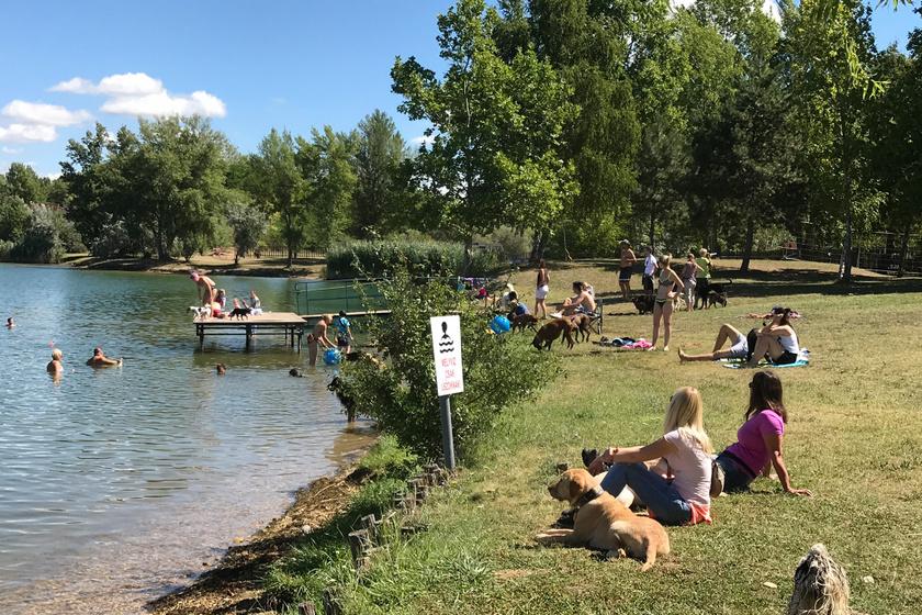 A kutyabarát Tavirózsa Kemping a délegyházi tavaknál található, a partra nyílik. A strandon, ami a kemping vendégeinek ingyenes, kijelöltek egy külön részt a kutyákkal érkezőknek. A kemping területén hetente kutyaiskola is van, amihez csatlakozni lehet. A strand reggel 8-tól este 8-ig van nyitva, a felnőtt napi belépő 1000 forint, kutyáknak 500 forint.