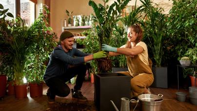 Ezt a 9 növényt tartsd a hálóban: tisztítják a levegőt, oldják a stresszt, segítik az alvást