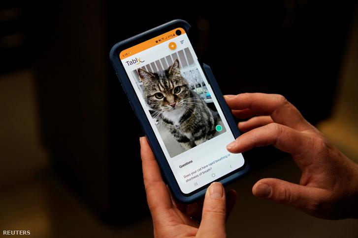 Dr. Liz Ruelle a Tably nevű új alkalmazást használja, amely olvassa a macska arcát és segít megfigyelni a macska egészségét a Wild Rose Cat klinikán Calgaryban, Kanadában 2021. július 14-én