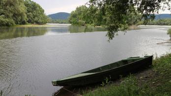 Tömegesen pusztulnak a halak a Duna egyik mellékfolyóján