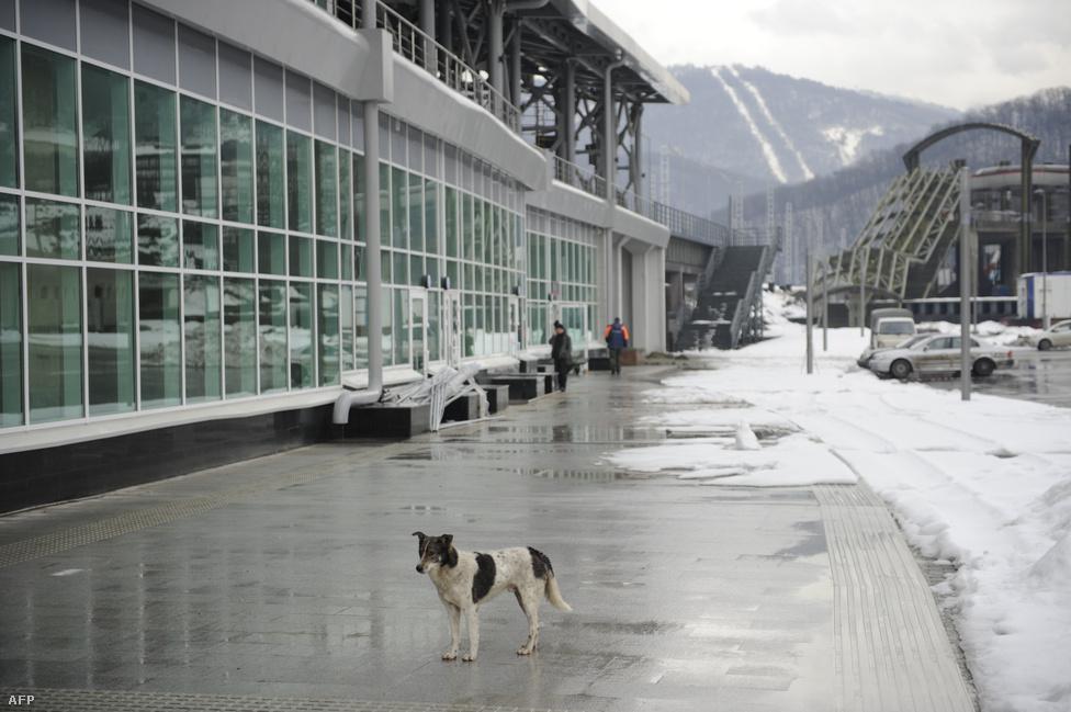 """Az új vasútállomás Kelet-Szadokban, Adler és Krasznaja Poljana között.                         """"Két napja a polgármester azt mondta, mindössze két panasz érkezett a munkakörülményekre. Ez azért van, mert minden panaszt elutasítanak"""" - nyilatkozta a Postnak Szemjon Szimonov, a Migráció és Jog nevű jogvédő szervezet helyi koordinátora. Még a fizetések behajtása is leküzdhetetlen akadályokba ütközik, gyakran azt se lehet kideríteni, hogy az alvállalkozók szövevényes hálózatában ki is a munkások valódi foglalkoztatója."""