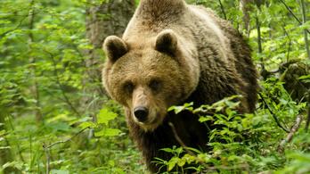 Két medvét is láttak Egerben