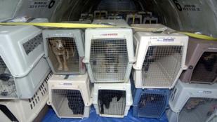 Ezért ennyire pusztító az illegális kutyakereskedelem