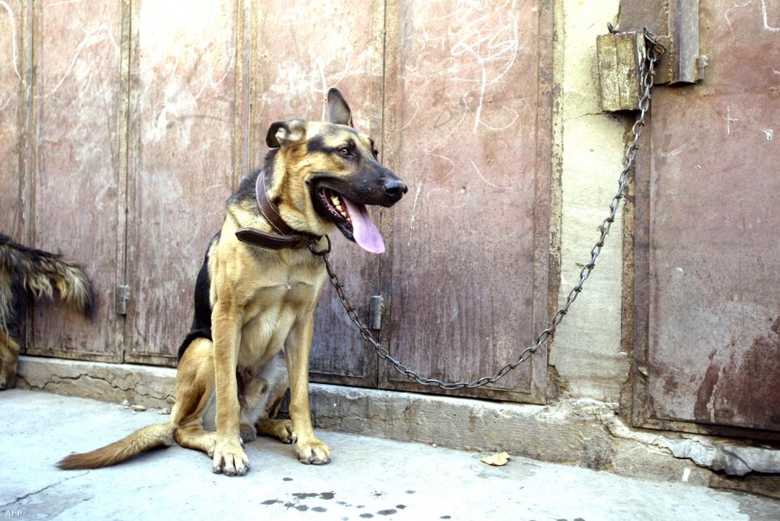 Egy megkötött kutya